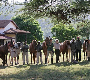 Stable Staff